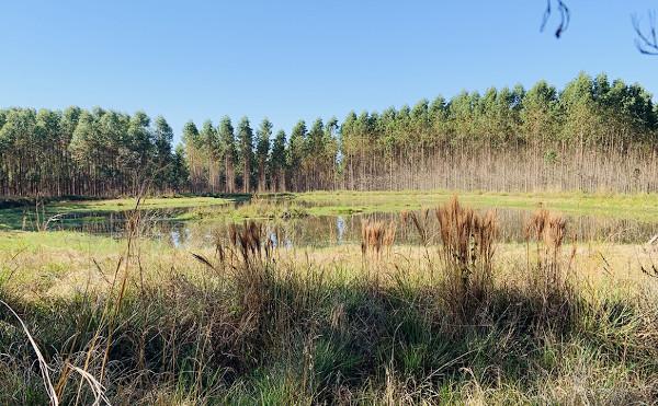 Miller Wald Paraguay