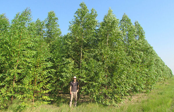 Paraguay Wald