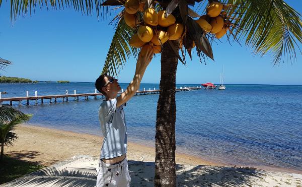 Gregor und die Kokosnuss