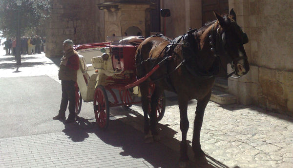 Pferdetaxi auf Mallorca